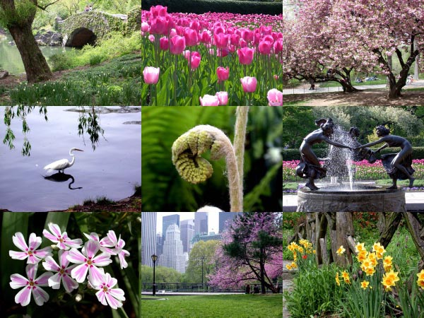 central park spring pictures. Central Park In Spring