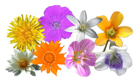 icons for mac os x showcasing both cultivated and wild flowers this    Real Flower Icons